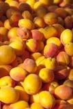 Fresh organic apricots. On happy sunny market, selective focus Stock Photos