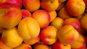 Apricots on the market royalty free stock images