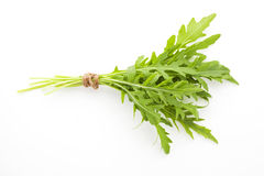 Fresh organic arugula bunch. Stock Photos