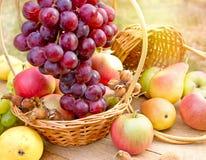 Fresh organic autumn fruits royalty free stock photography