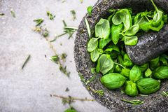 Fresh organic basil in concrete pestle or mortar royalty free stock image