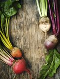 Fresh organic beetroots of different varieties. On wooden background, copy space Royalty Free Stock Photos