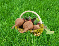 Fresh organic beets on the green grass.  Stock Photo