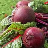 Fresh organic beets Royalty Free Stock Photos