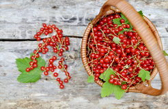 Fresh Organic Berry Fruits Woodent. Fresh Organic Berry Fruits Wooden Background Redcurrant Healthy Concept stock image