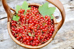 Fresh Organic Berry Fruits Woodent Royalty Free Stock Photos