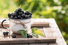 Fresh  organic black currant in a mug. Stock Images