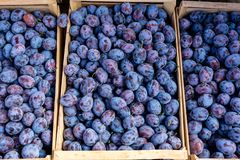 Fresh organic blue plums on the farmers market. Ripe plum fruits in the boxes. Healthy vegan food. Armenia royalty free stock photography