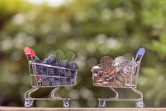 Free Fresh Organic Blueberries In Mini Shopping Cart Royalty Free Stock Photos - 122664318