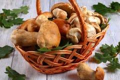 Fresh organic Boletus in wicker basket Royalty Free Stock Photo