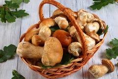 Fresh organic Boletus in wicker basket Stock Image