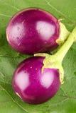 Fresh organic brinjals. Royalty Free Stock Photo