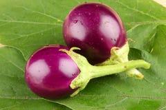 Fresh organic brinjals. Royalty Free Stock Images