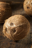 Fresh Organic Brown Coconut Royalty Free Stock Photo