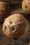 Fresh Organic Brown Coconut Royalty Free Stock Photo
