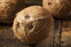 Fresh Organic Brown Coconut Royalty Free Stock Photography