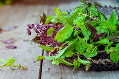 Fresh organic Bunch of green and purple basil on the vintage wooden background. Selective focus. Space for text Royalty Free Stock Image