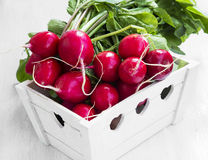 Fresh organic bunch of radishes Stock Image
