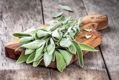 Fresh organic bundle of sage Royalty Free Stock Images