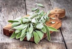 Fresh organic bundle of sage Royalty Free Stock Images