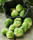 Fresh organic cabbage. Brussels sprouts. Royalty Free Stock Photo