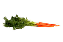 Fresh organic carrot Stock Photography