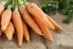 Fresh carrot with green tops Stock Photo