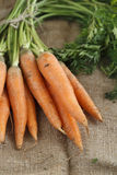 Fresh carrot with green tops Stock Photography