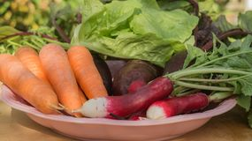Fresh organic carrot, salad, radish, beetroot with green leaves in plate on wooden background. Fresh organic carrot, salad, radish, beetroot with green leaves Royalty Free Stock Image