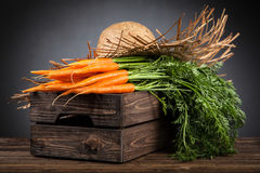 Fresh organic carrot Royalty Free Stock Images