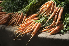 Fresh organic carrots Stock Photos