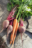 Fresh organic carrots and beet. Royalty Free Stock Photos