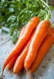 Fresh organic carrots Royalty Free Stock Image