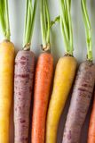 Fresh Organic Carrots Raw Colorful Bunch Isolated Close Up On Wh Royalty Free Stock Photos
