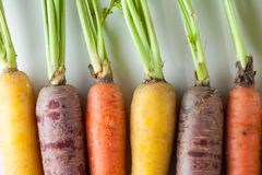 Fresh Organic Carrots Raw Colorful Bunch Isolated Close Up On Wh Stock Photo