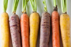 Fresh Organic Carrots Raw Colorful Bunch Isolated Close Up On Wh Stock Photography