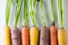 Fresh Organic Carrots Raw Colorful Bunch Isolated Close Up On Wh Royalty Free Stock Photography
