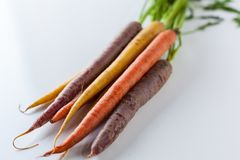 Fresh Organic Carrots Raw Colorful Bunch Isolated On White Backg Stock Photography