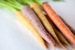 Fresh Organic Carrots Raw Colorful Bunch Isolated On White Backg Royalty Free Stock Images