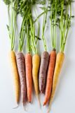 Fresh Organic Carrots Raw Colorful Bunch Isolated On White Backg Stock Image