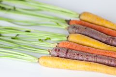 Fresh Organic Carrots Raw Colorful Bunch Isolated On White Backg Stock Images