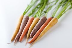 Fresh Organic Carrots Raw Colorful Bunch Isolated On White Backg Royalty Free Stock Photo