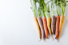 Fresh Organic Carrots Raw Colorful Bunch Isolated On White Backg Stock Photos