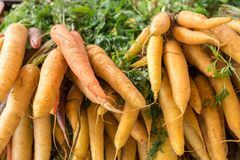 Fresh organic carrots for sale at a local market. Fresh organic carrots for sale at a local city market stock photography
