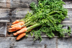 Fresh organic carrots with tops and roots for genuine gardening Royalty Free Stock Photo