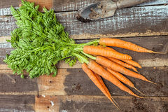 Fresh  organic carrots on wood background Stock Images