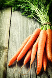 Fresh organic carrots Stock Image