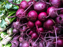 Fresh organic celery and beetroot at farmers Market Royalty Free Stock Photos