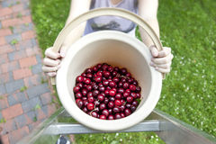 fresh organic cherries Royalty Free Stock Photography