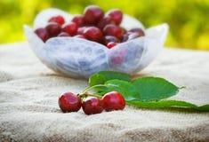 Fresh organic cherries Royalty Free Stock Photo